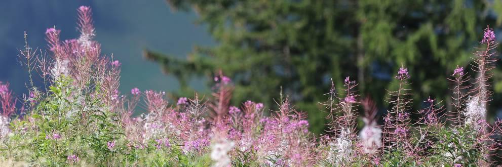 Gnserndorf singles und umgebung - Puch bei hallein